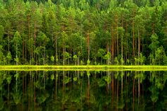 Photo by Petri Karvonen   Reflections on Tervalampi #nature #suomi #finland