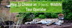 How To Choose an Ethical Wildlife Tour Operator Animal Experiences, Volunteer Abroad, Wildlife Conservation, Tour Operator, Travel Abroad, Travelling, Things To Do, Africa, Tours