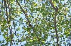 #tree #nature #Rome