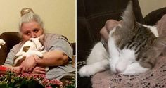 Tailless Cat Insists to Be with Sad Grandma Who Never Liked Cats, It Changes Her Life...
