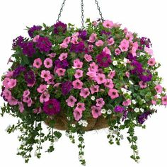 hanging baskets Description This blooming, 10 spring basket is a delight! Bursting with a mix of Petunia, theres no need to wait for summer to enjoy brilliant, flowering color. Container Flowers, Flower Planters, Container Plants, Container Gardening, Succulent Containers, Plants For Hanging Baskets, Hanging Flowers, Hanging Planters, Fall Planters