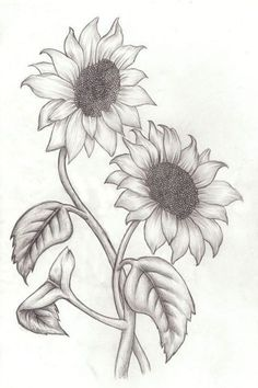 best 25 sunflower drawing ideas on sunflower tattoos Pencil Drawings Of Flowers, Pencil Art Drawings, Art Drawings Sketches, Easy Drawings, Art Sketches, Drawing Flowers, Realistic Flower Drawing, Sketches Of Flowers, Drawing With Pencil