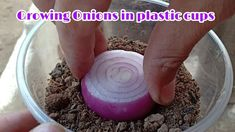 Growing Vegetables In Pots, Growing Onions, Fruit Plants, Agriculture, Farming, Plastic Cups, Container Gardening, The Creator, Indian