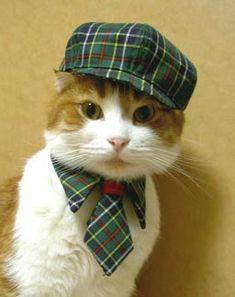 Gatos y gatitos - Gatitolandia - Moda