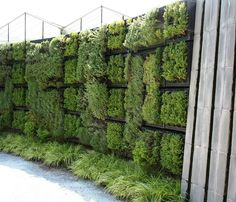Gorgeous AND useful: herb wall.