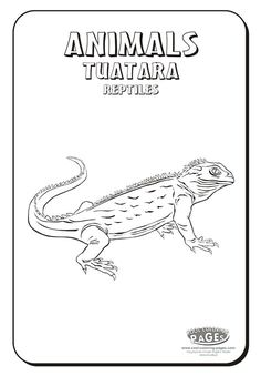 tuatara tuatara coloring pages reptiles colouring