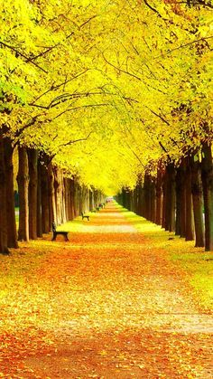 Yellow Wallpaper For Iphone Group ) Beautiful Landscape Wallpaper, Scenery Wallpaper, Beautiful Landscapes, Yellow Tree Wallpaper, Golden Wallpaper, Beautiful Nature Pictures, Amazing Nature, Nature Photos, Nature Nature