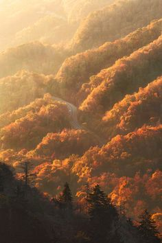 """wonderous-world: """" Smoky Mountains National Park, Tennessee, USA by Jesse Summers """""""