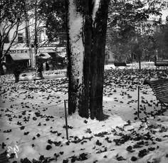 Takatalven kinoksia Kappeliesplanaadilla.   Timiriasew Ivan 1.5.1915—31.5.1915   Helsingin kaupunginmuseo   negatiivi, nitraatti, mv