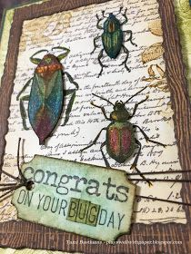 Did you ever have a school assignment on entomology? I remember in elementary school we studied bugs and had to do an insect board where w...