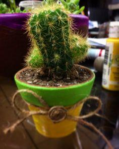 Cactus para venta