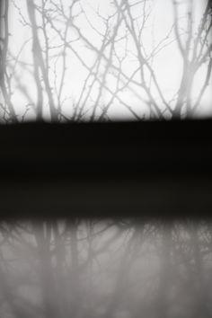 Trees through a misty window inspire Tree Mist rug