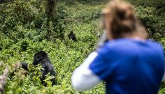 A Comprehensive Guide to Gorilla Trekking | Bench Africa