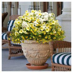 Wave Basket Mix 'Lemon Dream' 3N1 4 Pots 3pc Flowering Plants Seasonal - Cottage Hill - Grown In All U.S.D.A. Hardiness Zones