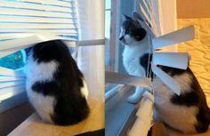 Cats Vs. Blinds Humor Cats Vs. Blinds Cats  funny animals