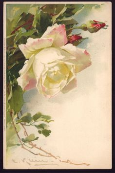 1900s Old Postcard Meissner Buch Litho Catherine C Klein White Rose Germany | eBay