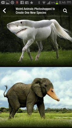 fake animals