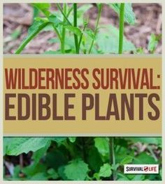 Wilderness Survival: What to Eat in the Wild | Know How To Recognize Edible Plants With These Skills & Tips For Outdoor Survival By Survival Life http://survivallife.com/2015/03/19/wilderness-survival-what-to-eat/