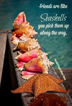 Friends are like Seashells...