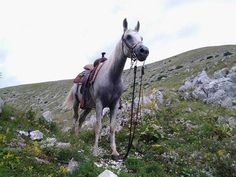 Horsetrip in Tuscany, unique Trekking, including hotel stays, great dinners, pools, sights, fun and adventure, book now your riding experience in Italy   EQUESTRIAN ITALY OUR HORSES, YOUR TOUR GUIDES! Follow us on www.equestrianitaly.com! 'Custom Tailored' Horseback Riding Adventure & Ranch Vacations!