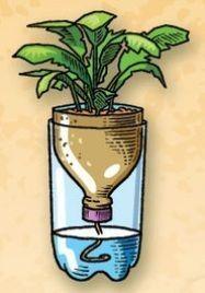 Ken je dat? Je koopt verse kruiden in een pot, maar ze houden het niet lang uit. Daphne vertelt hoe ze heel simpel een zelfwaterende pot maakte.