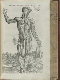 Andreas Vesalius, 'De humani corporis fabrica libri septem'. (1543)