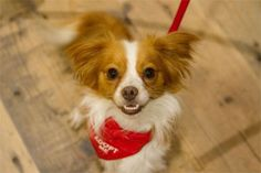 Anthropologie's Sit Stay Love Campaign for Pets | Raman Media Network