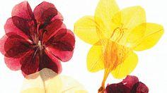 How to press flowers Aprenda cómo prensar flores en tan sólo unos sencillos pasos