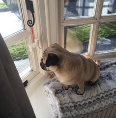 Neighbourhood watch  #qtpugs #purepugspp #pug #pugs #pugsofinstagram #pugbasement #pugsproud_feature #badasspugclub #bubblebeccahat #cupcake_pug #dailydoseofpugs #eddthepug #flatnosedogsociety #gilesfriends #heyportiapickme #henrys1inamillion #itslolathepug #lolasfotw #lacyandpaws #mysquishyliciousfriends #puglife #speakpug #squishyfacecrew #thetomcoteshow #zerozeropug by alfiethepug_beat