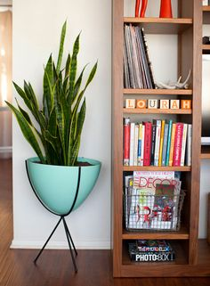it's finally here: our house tour on design*sponge! - a house in the hills - interiors, style, food, and dogs Large Indoor Plants, Indoor Plant Pots, Apartment Plants, Home Decor Inspiration, Decor Ideas, Decoration, Home And Living, Home Accessories, Living Spaces