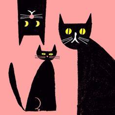 Rob Hodgson, black cats