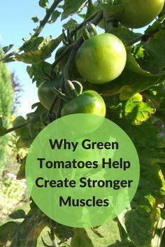 Green tomatoes help create stronger muscles