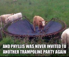 Poor Phyllis.