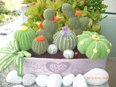 cactus de crochet en el jardin.