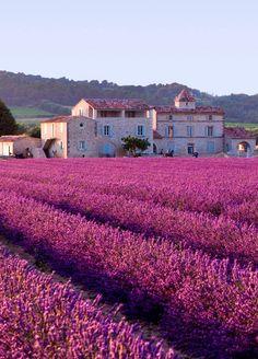 ...Plateau de Valensole, Provence, France...Todos podemos cuidar nuestra casa