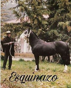 Chilean horse purebred- Caballo Chileno de pura raza record since 1893. conquistadores españoles en Chile Pony Breeds, Horse Breeds, Rodeo, South America, Creatures, Racing, Horses, Gaucho, Saddles