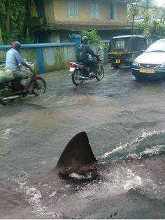 Shark in town