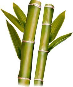 Bambus #bamboo #ingredients