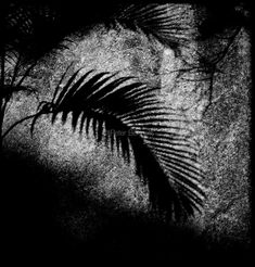 Macau. Shadow of palm. (Polaroid)