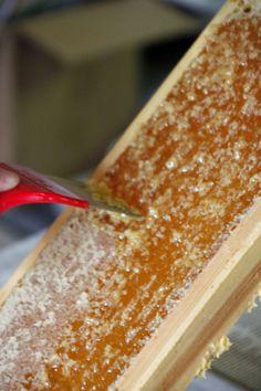 Step-by-step honey harvesting tutorial for beekeepers.