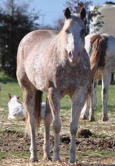 Ranch! Winchester Shotgun, Horses For Sale, Palomino, Pinto Horses, Ranch, Roses, Painting, Animals, Beauty
