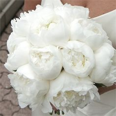 Hand-tied bouquet of snowy white peonies for the bride, and bunches of white hydrangeas for the two bridesmaids. The flower girl had a star shaped wand made from pretty white flowers to carry, whilst Walker's 'best man', his sister Hazel, had a wrist corsage of white hydrangeas.