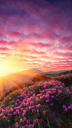 The sunlight creeps up. Slowly spreading its sun rays across the hills. The flowers wake up. Spread their beautiful flowers and smile to the sky. They know this will be a great day!