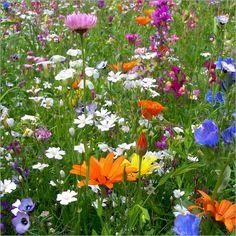 Blumenwiese Poster von blackpool bei Posterlounge // Gibt es im Sommer etwas schöneres als blühende #Wildblumenwiesen? Leider sind sie extrem selten geworden :-(