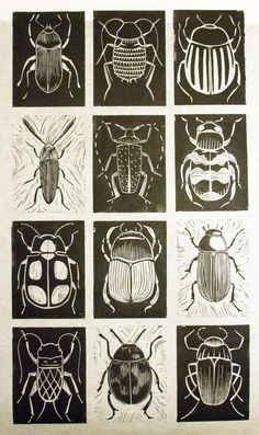 printmaking ideas linoleum scratch art idea Black and white. Chalk and charcoal. Kratz Kunst, Silkscreen, Bug Art, Scratch Art, Insect Art, Beetle Insect, Art Classroom, Linocut Prints, Chalk Art