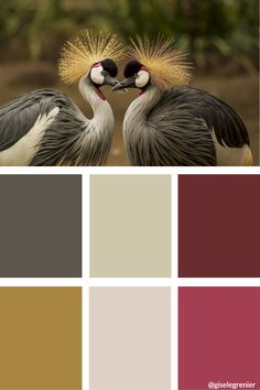 I would need a few more squares for all the values in the dark feathers. Simply take the dark brown value shown and darken with black or a complimentary colour. Colour mixing palette I've created for students to use as reference.