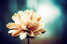 aqua fall flower