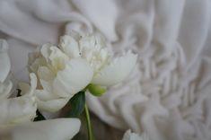 White Peonies / Silk velvet / Fabric manpulation