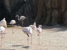 3/7 o 7/3.Hay 7 aves pero 3 están en el medio y 7 alrededor o en otro caso 7 alrededor y tres en el medio.