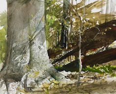 """Beech Tree - Andrew Wyeth - this watercolor doesn't look at all like a """"standard"""" Wyeth, but it further illustrates what a magnificent artist he was. Andrew Wyeth Paintings, Andrew Wyeth Art, Watercolor Trees, Watercolor Landscape, Landscape Paintings, Jamie Wyeth, Johannes Itten, Nc Wyeth, American Artists"""